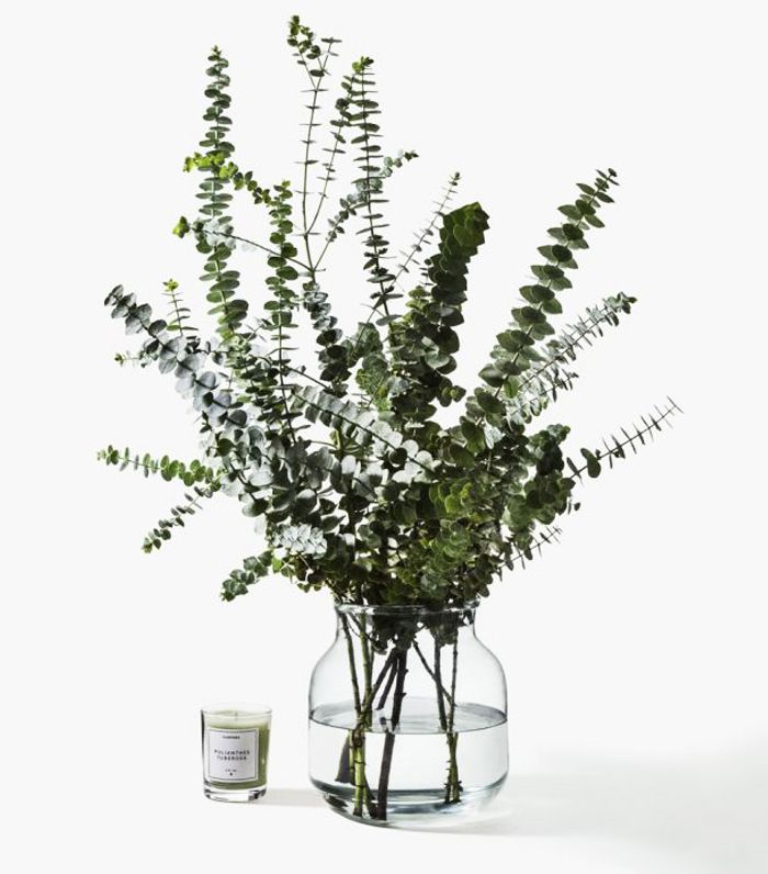 air-purifying plants: Eucalyptus