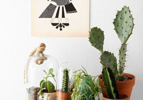 Various cacti and plants on a table in a home
