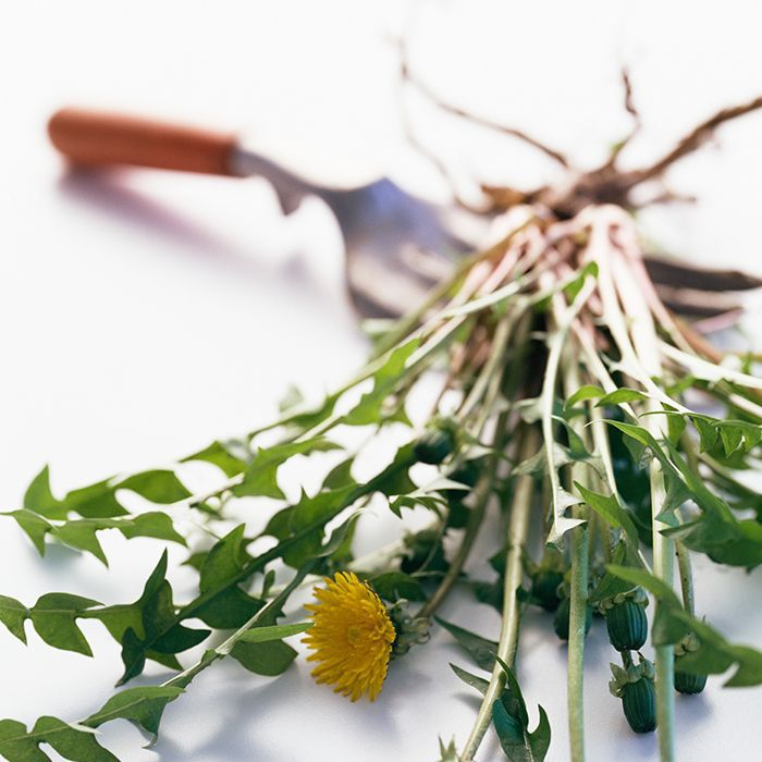8 Healing Herbs You Need to Know About