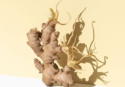 ginger root in bright yellow studio