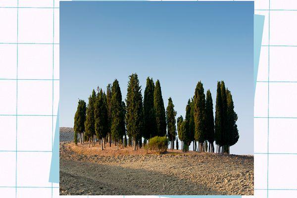 cypress oil