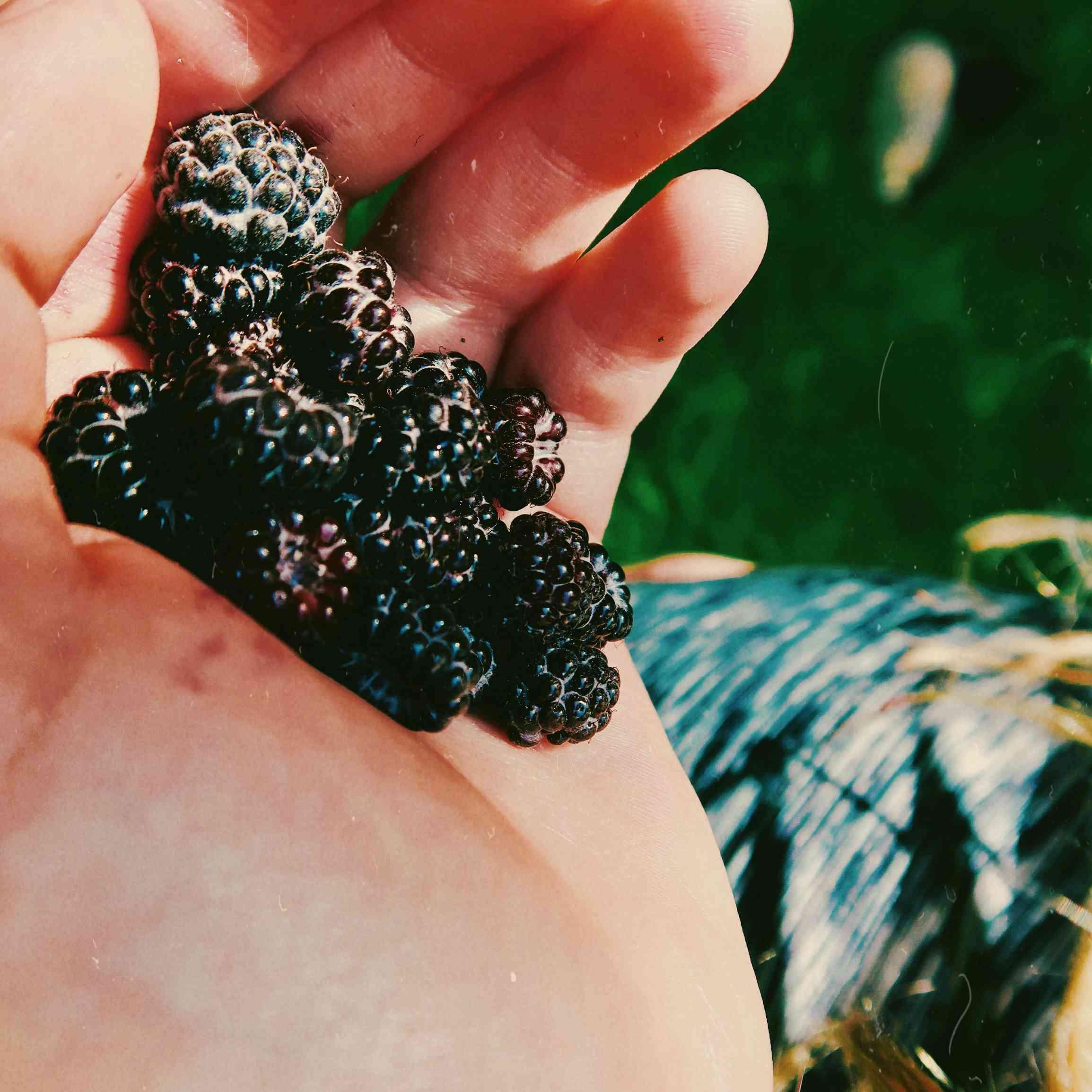 handful of blackberries