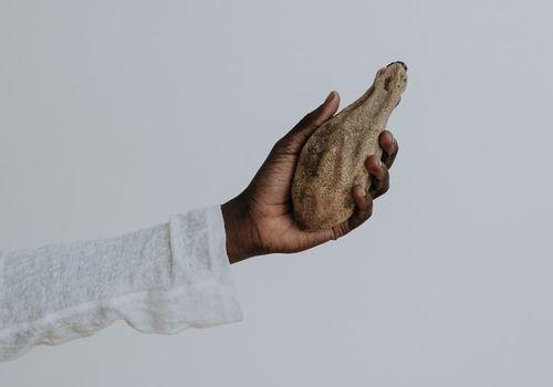 A hand holding a kigelia africana plant.