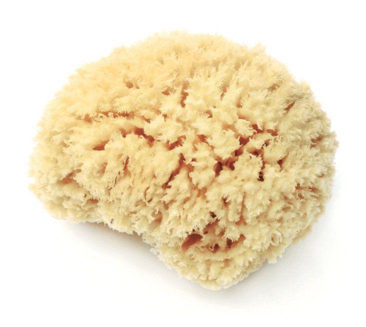 Lather Natural Sea Wool Sponge