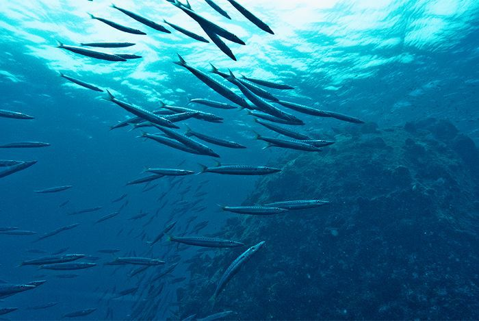 Underwater view of fish in the sea