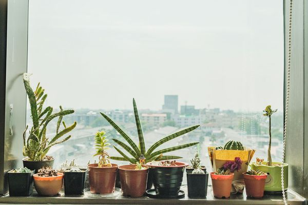 Close-Up Of Potted Plant On Window Sill Against Sky In City
