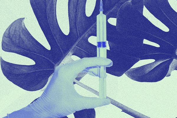 Syringe with palm