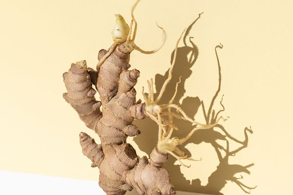ginger root in bright yellow studio
